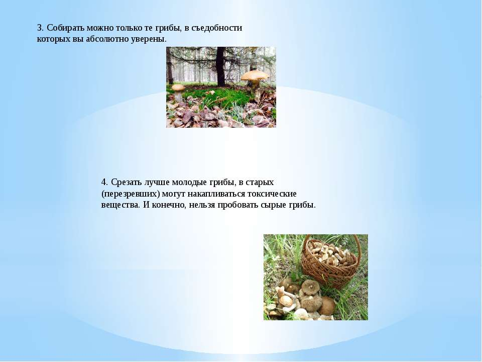 3. Собирать можно только те грибы, в съедобности которых вы абсолютно уверены...