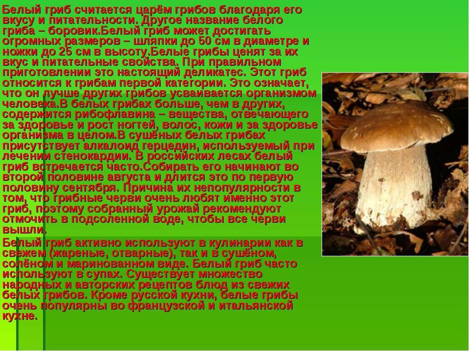Белый гриб считается царём грибов благодаря его вкусу и питательности. Другое...