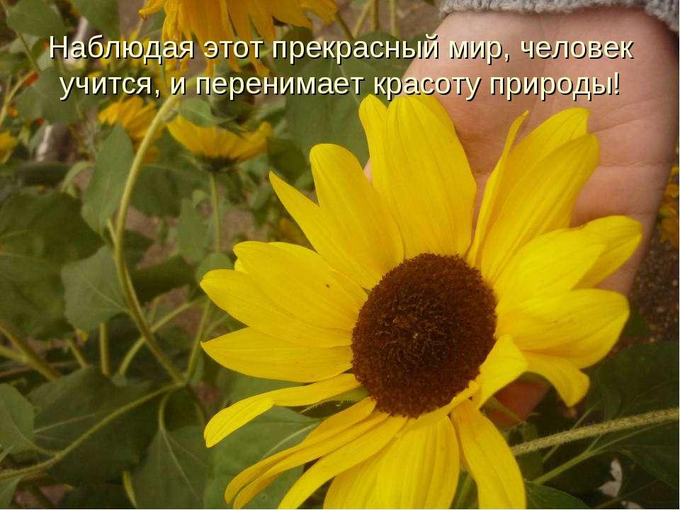 Наблюдая этот прекрасный мир, человек учится, и перенимает красоту природы!