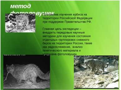 метод фотоловушек Программа изучения ирбиса на территории Российской Федераци...