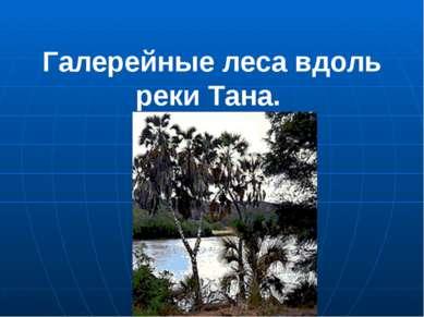 Галерейные леса вдоль реки Тана.