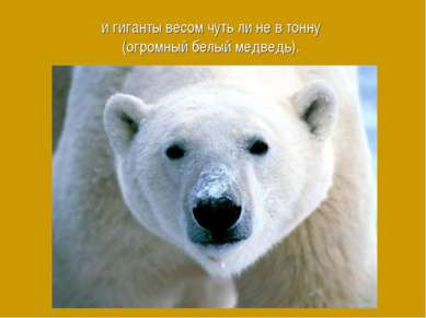 и гиганты весом чуть ли не в тонну (огромный белый медведь).