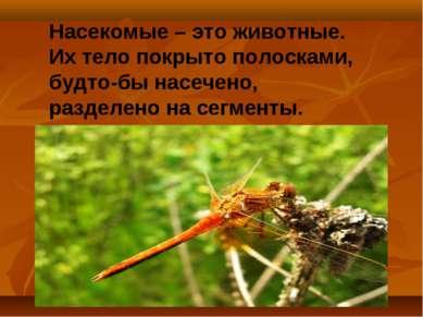Насекомые – это животные. Их тело покрыто полосками, будто-бы насечено, разде...