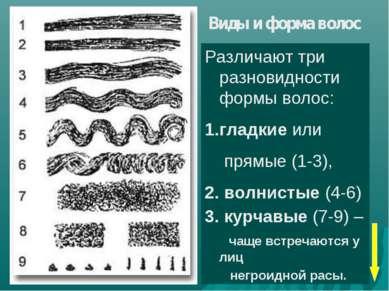 Виды и форма волос Различают три разновидности формы волос: гладкие или прямы...
