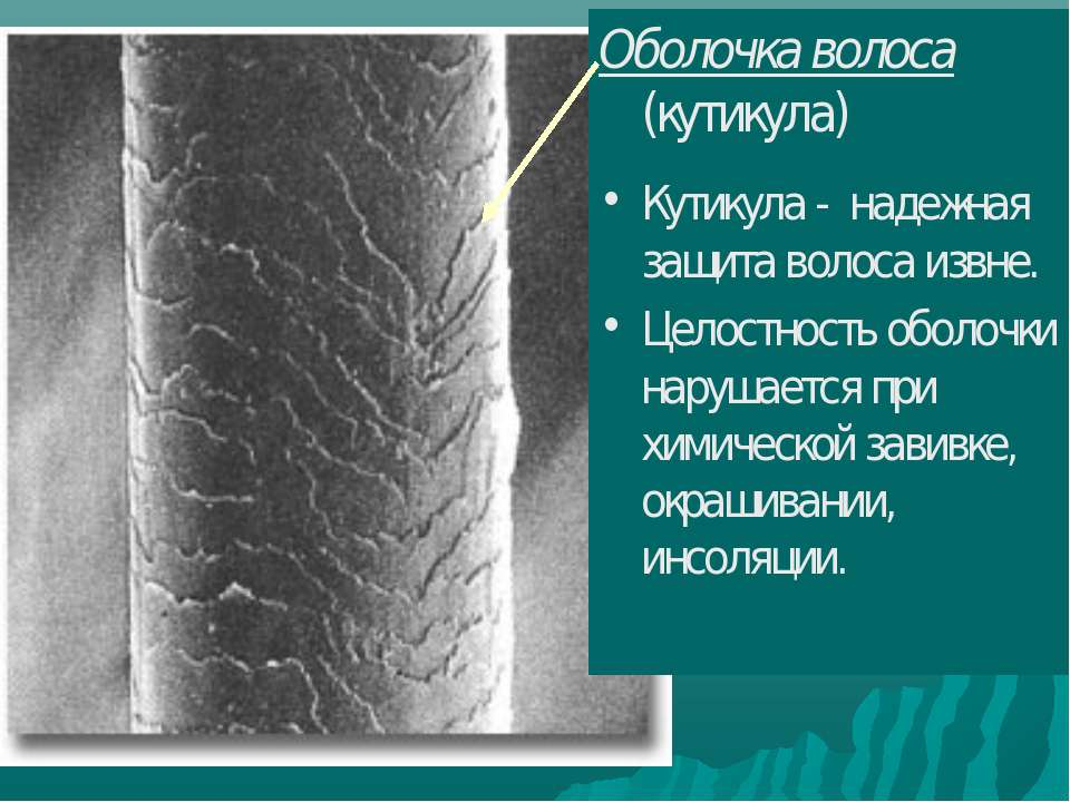 Оболочка волоса (кутикула) Кутикула - надежная защита волоса извне. Целостнос...
