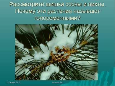 * Яковлева Л.А. * Рассмотрите шишки сосны и пихты. Почему эти растения называ...