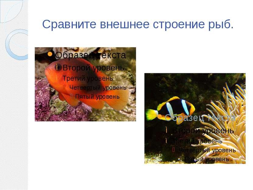 Сравните внешнее строение рыб.