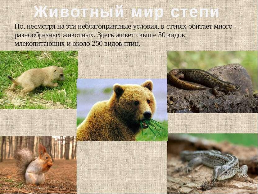 Животный мир степи Но, несмотря на эти неблагоприятные условия, в степях обит...