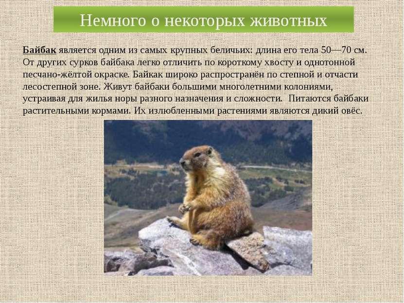 Немного о некоторых животных Байбак является одним из самых крупныхбеличьих:...