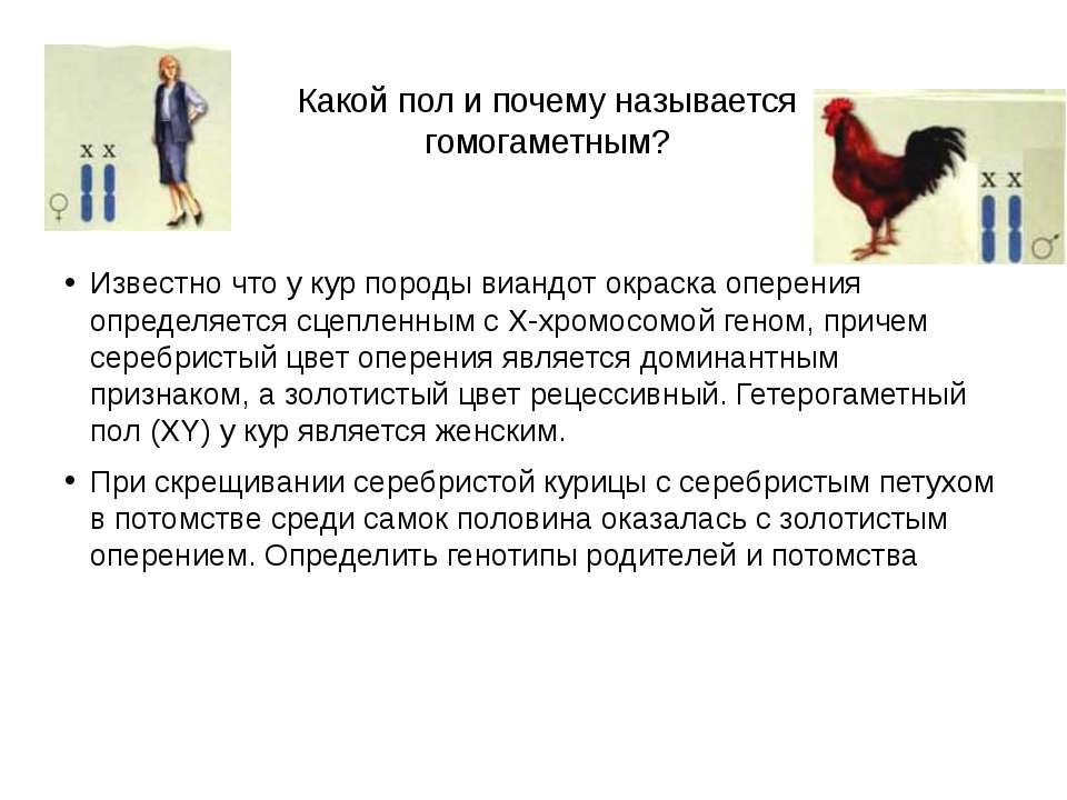Какой пол и почему называется гомогаметным? Известно что у кур породы виандот...