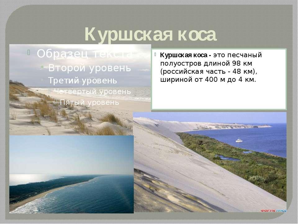 Куршская коса Куршская коса -это песчаный полуостров длиной 98 км (российска...