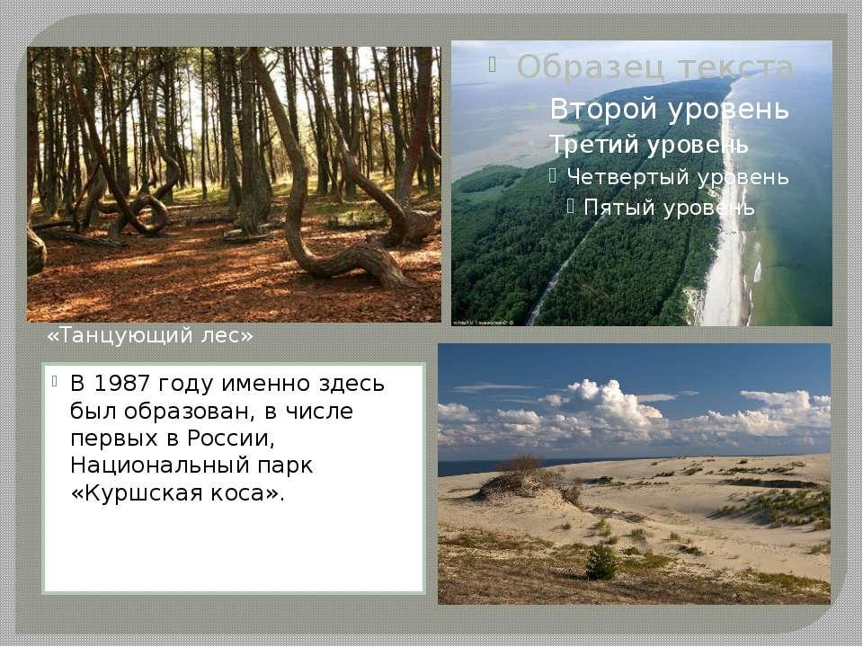 В 1987 году именно здесь был образован, в числе первых в России, Национальный...