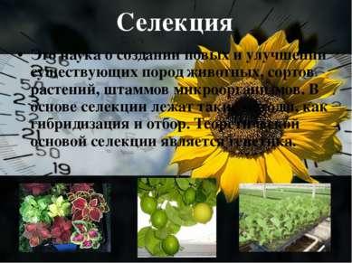 Селекция Это наука о создании новых и улучшении существующих пород животных, ...