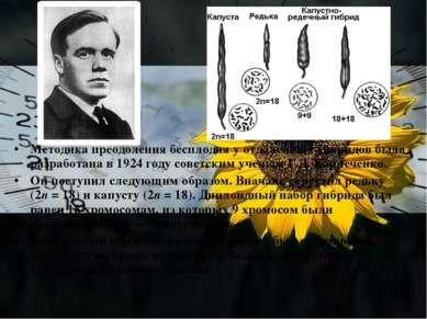 Методика преодоления бесплодия у отдаленных гибридов была разработана в 1924 ...