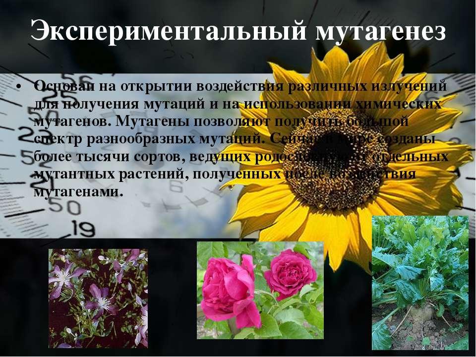 Экспериментальный мутагенез Основан на открытии воздействия различных излучен...