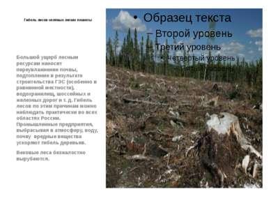 Гибель лесов-зелёных легких планеты Большой ущерб лесным ресурсам наносит пер...