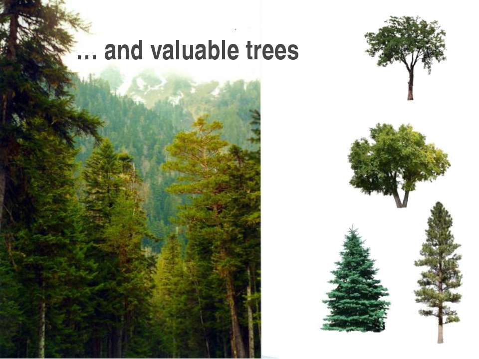 … and valuable trees
