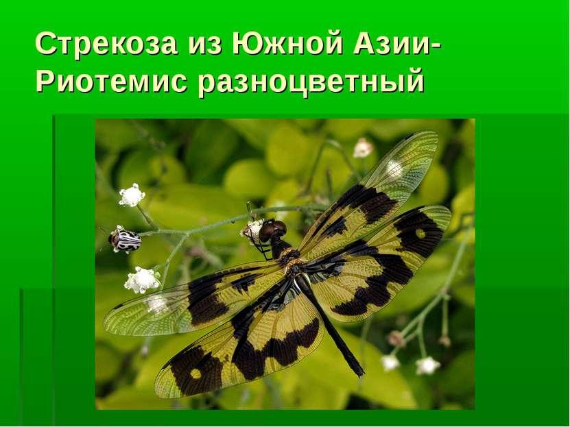 Стрекоза из Южной Азии-Риотемис разноцветный