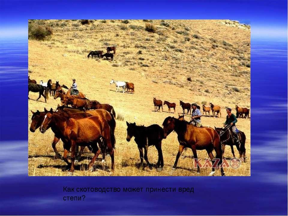 Как скотоводство может принести вред степи?