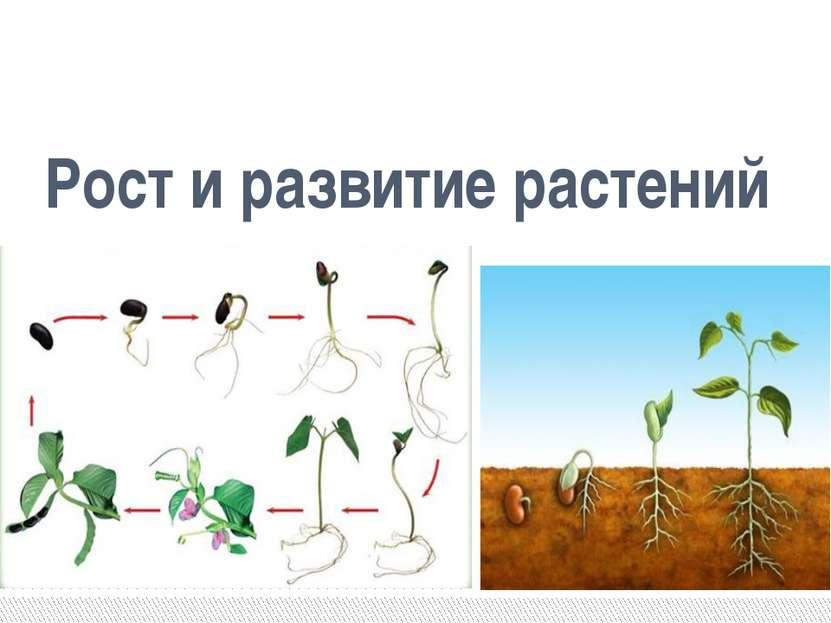 Рост и развитие растений