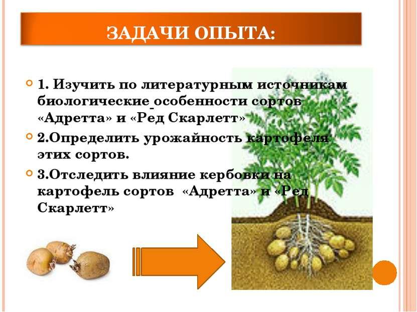 1. Изучить по литературным источникам биологические особенности сортов «Адрет...