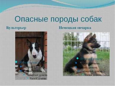 Опасные породы собак Бультерьер Немецкая овчарка