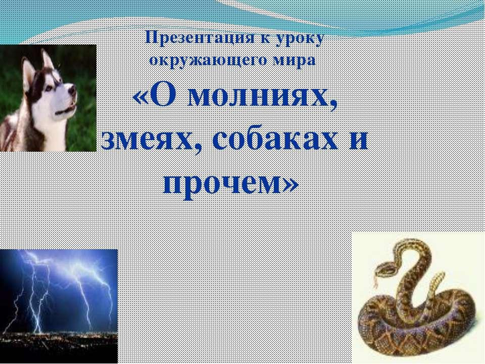 Презентация к уроку окружающего мира «О молниях, змеях, собаках и прочем»