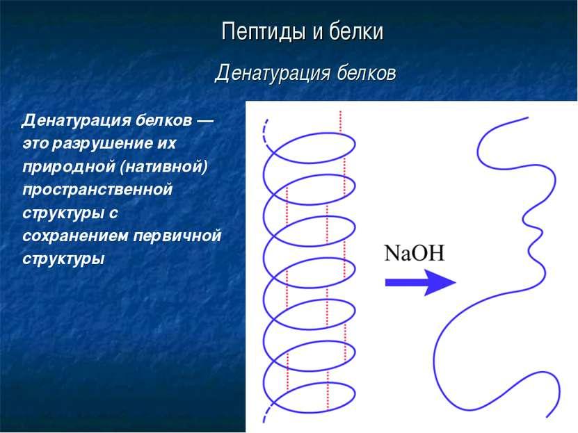 * Пептиды и белки Денатурация белков Денатурация белков — это разрушение их п...
