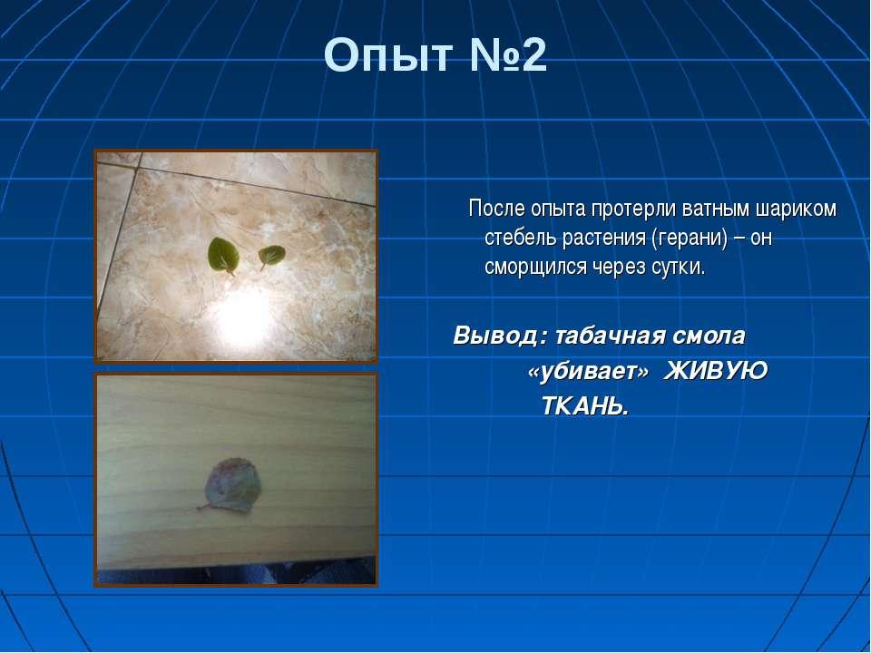 Опыт №2 После опыта протерли ватным шариком стебель растения (герани) – он см...