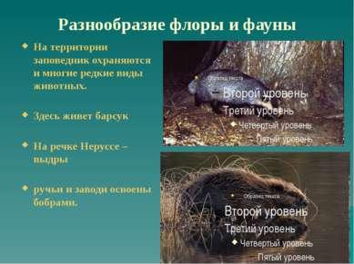 Разнообразие флоры и фауны На территории заповедник охраняются и многие редки...