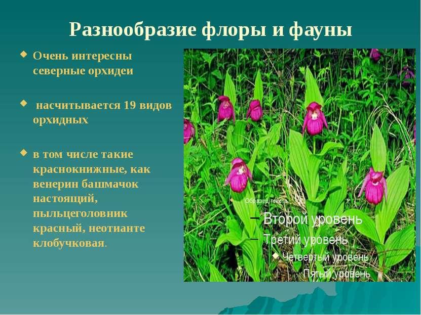 Разнообразие флоры и фауны Очень интересны северные орхидеи насчитывается 19 ...