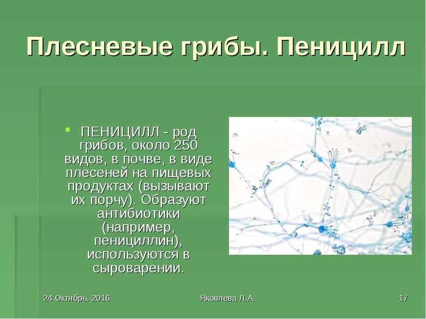 * Яковлева Л.А. * Плесневые грибы. Пеницилл ПЕНИЦИЛЛ - род грибов, около 250 ...