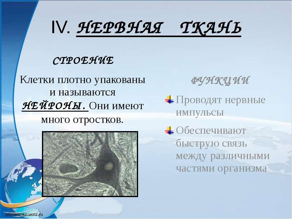 IV. НЕРВНАЯ ТКАНЬ СТРОЕНИЕ Клетки плотно упакованы и называются НЕЙРОНЫ. Они ...