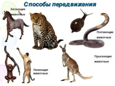 Бегающие животные Ползающие животные Прыгающие животные Лазающие животные Спо...