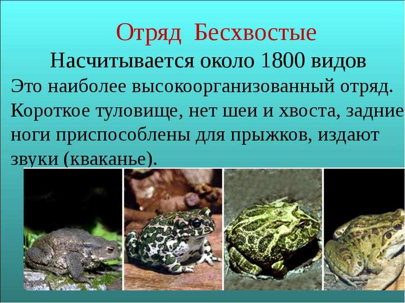 Отряд Бесхвостые Насчитывается около 1800 видов Это наиболее высокоорганизова...