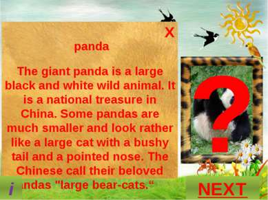 ? What is this animal? GUESS? P A N D A NEXT i X panda The giant panda is a l...