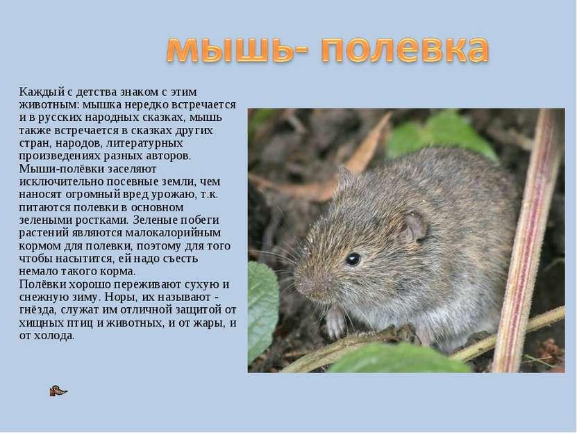 Каждый с детства знаком с этим животным: мышка нередко встречается и в русски...