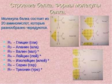 Строение белка. Формы молекулы белка. Молекула белка состоит из 20 аминокисло...