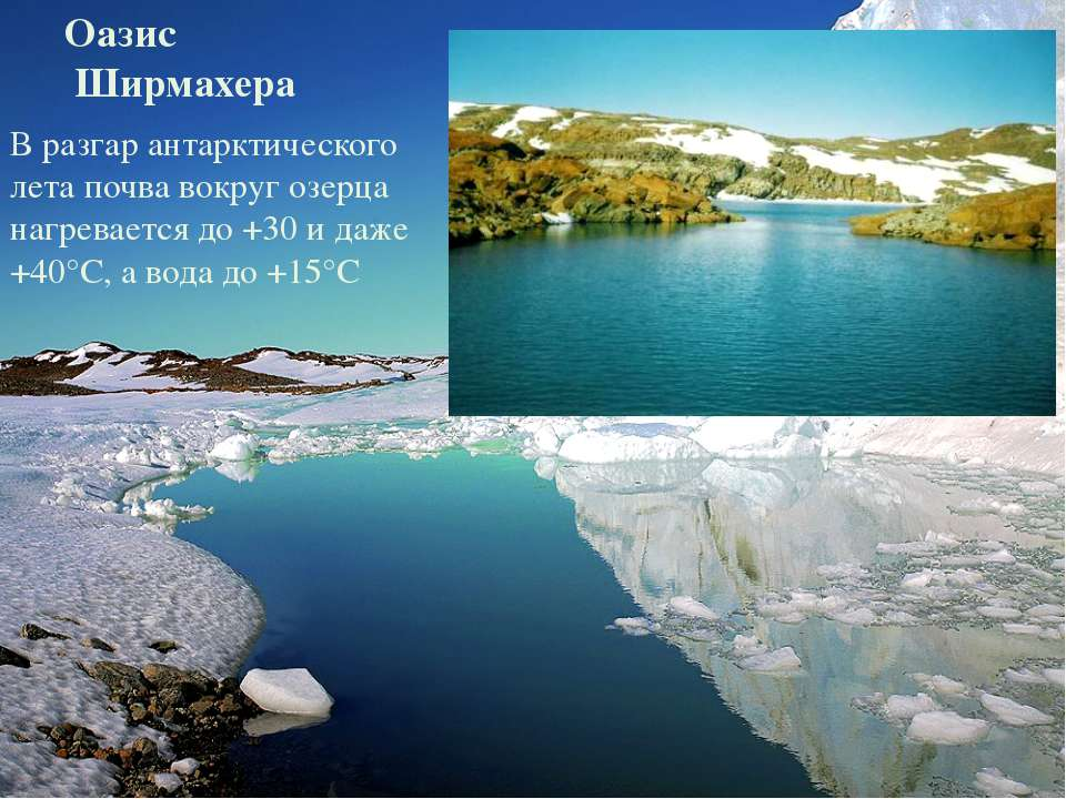 Оазис Ширмахера В разгар антарктического лета почва вокруг озерца нагревается...