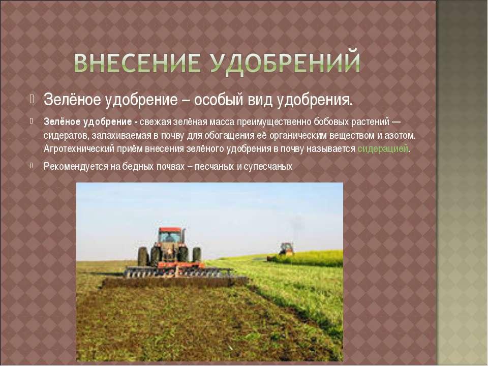 Зелёное удобрение – особый вид удобрения. Зелёное удобрение - свежая зелёная ...