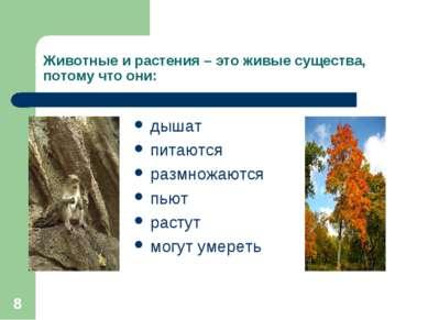 * Животные и растения – это живые существа, потому что они: дышат питаются ра...