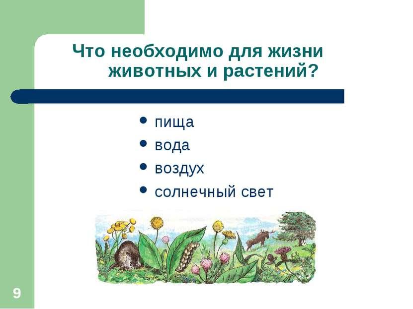 * Что необходимо для жизни животных и растений? пища вода воздух солнечный свет