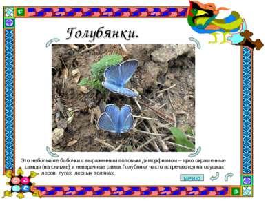 Голубянки. Это небольшие бабочки с выраженным половым диморфизмом– ярко окра...