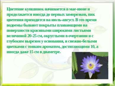 Цветение кувшинок начинается в мае-июне и продолжается иногда до первых замор...
