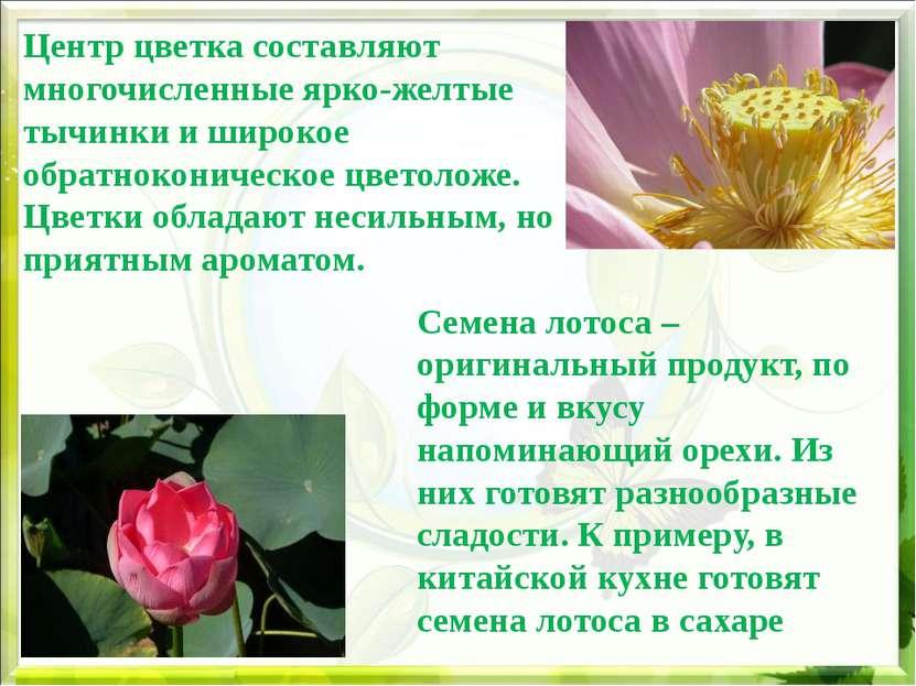 Центр цветка составляют многочисленные ярко-желтые тычинки и широкое обратнок...