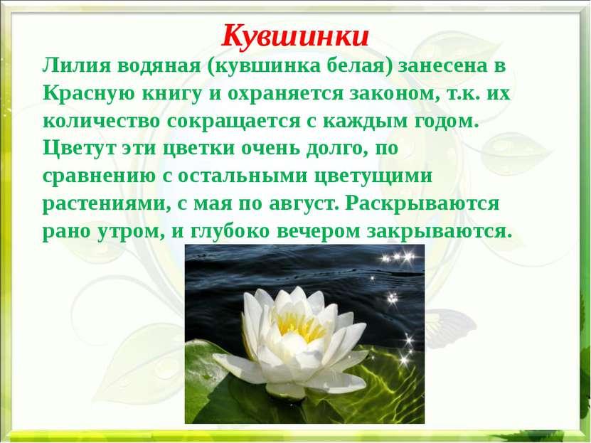 Кувшинки Лилия водяная (кувшинка белая) занесена в Красную книгу и охраняется...