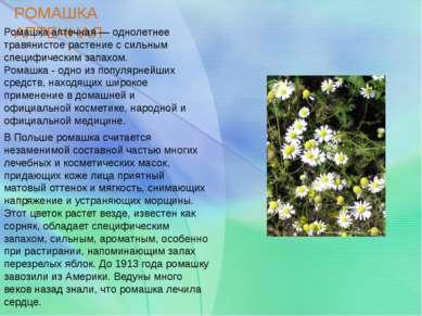 РОМАШКА АПТЕЧНАЯ Ромашка аптечная — однолетнее травянистое растение с сильным...