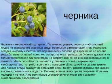 Черника – многолетний кустарник.. По мнению ученых, черника – абсолютный лиде...