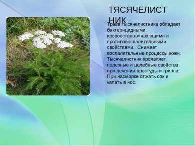 ТЯСЯЧЕЛИСТНИК Трава тысячелистника обладает бактерицидными, кровоостанавливаю...