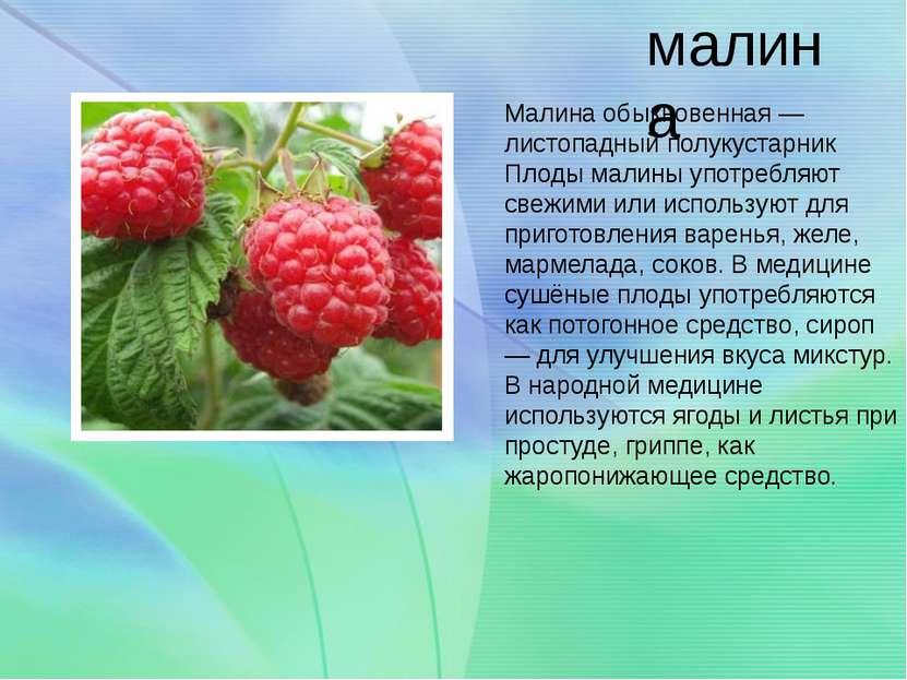 малина Малина обыкновенная — листопадный полукустарник Плоды малины употребля...